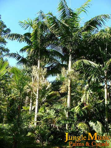 example of tropical landscaping